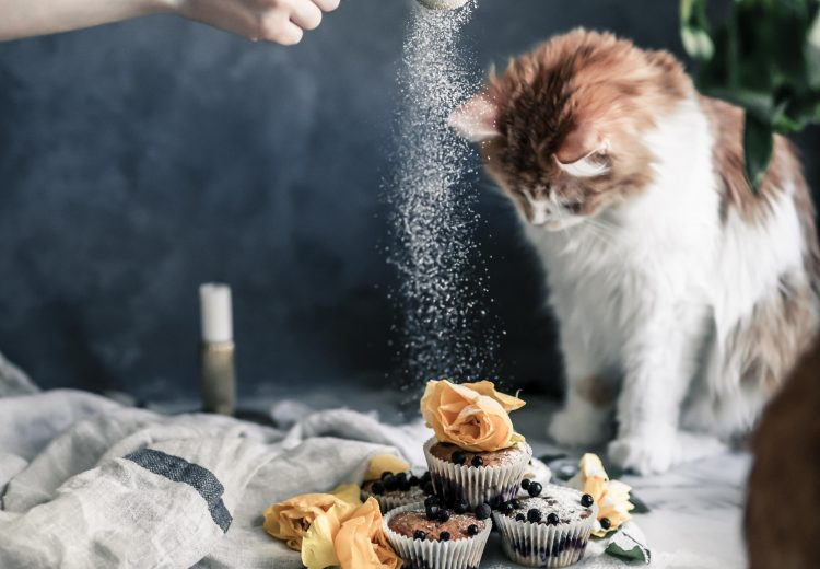 Cat and food photography